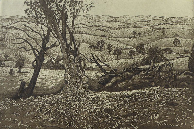 Denise Scholz-Wulfing - Paddocks with Gum Trees. Taylors Flat