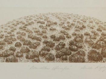 Sandi Rigby - Boundless Spinifex